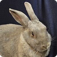 Adopt A Pet :: Fluffer - Evansville, IN
