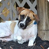 Hound (Unknown Type)/Beagle Mix Dog for adoption in Woodbury, New Jersey - Sadie Loves other Dogs