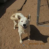 Adopt A Pet :: Little Lotta - Radium Springs, NM