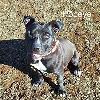 Adopt A Pet :: Popeye - Yreka, CA