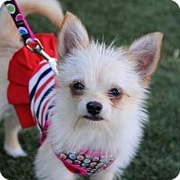 Adopt A Pet :: Juliette - McKinney, TX