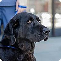 Adopt A Pet :: Sonya - Cumming, GA