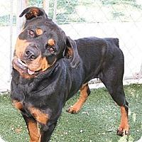 Adopt A Pet :: Molly - Seffner, FL