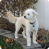 Adopt A Pet :: Tippy - South Amboy, NJ