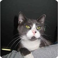 Adopt A Pet :: Foxy - Jenkintown, PA