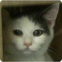 Adopt A Pet :: Harmony - Annapolis, MD