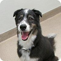 Adopt A Pet :: Goober - Gilbert, AZ