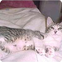 Adopt A Pet :: Bella - Jenkintown, PA