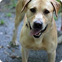 Adopt A Pet :: Franklin - Tinton Falls, NJ