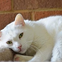 Adopt A Pet :: Helton 13103 - Atlanta, GA