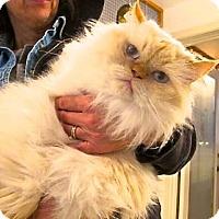 Adopt A Pet :: Sassy - Davis, CA