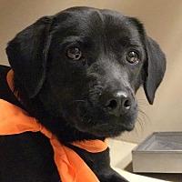 Adopt A Pet :: Trix - Snyder, TX