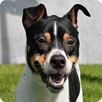 Adopt A Pet :: SHASTA - West Palm Beach, FL
