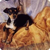 Adopt A Pet :: Ryder - Tonawanda, NY
