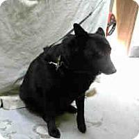 Adopt A Pet :: URGENT 04/27 BIG BEAR - San Bernardino, CA