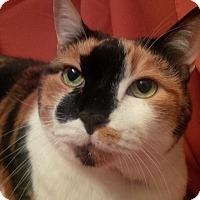 Adopt A Pet :: Lovie - Jackson, NJ