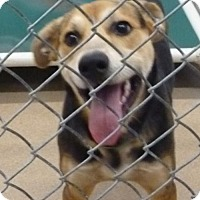 Adopt A Pet :: 50128 Buck sponsored $95 plus tags - Zanesville, OH