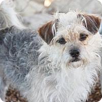 Adopt A Pet :: Dougie Big Dog - Mahwah, NJ