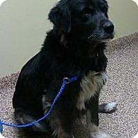 Adopt A Pet :: Hoppy - Columbus, IN