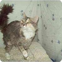 Adopt A Pet :: Rosey - Orlando, FL