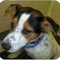 Adopt A Pet :: Darling FOSTER NEEDED URGENT - Seattle, WA