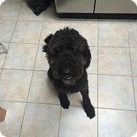 Adopt A Pet :: Radar - Acushnet, MA