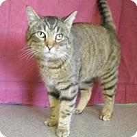 Adopt A Pet :: Quinn - Larned, KS