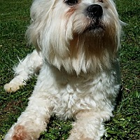 Adopt A Pet :: Bobby - Lawrenceville, GA