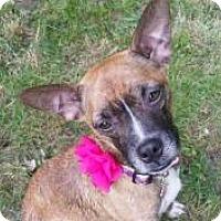 Adopt A Pet :: JEWEL - Marlton, NJ
