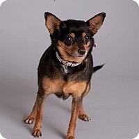 Adopt A Pet :: Jazzy - Mesa, AZ