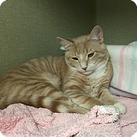 Adopt A Pet :: Atlantis - Middletown, NY