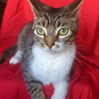 Adopt A Pet :: APRIL - pasadena, CA