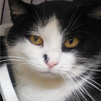Adopt A Pet :: Patrick - Belvidere, NJ