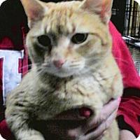 Adopt A Pet :: Tango - Trevose, PA