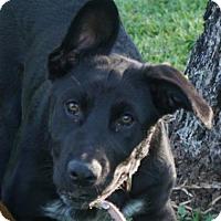 Adopt A Pet :: Emma - Santa Fe, TX