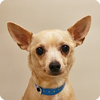 Adopt A Pet :: *CRUZ - Las Vegas, NV