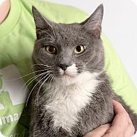 Adopt A Pet :: Shaq - Wilmington, DE