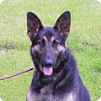 Adopt A Pet :: Cashew - Rigaud, QC