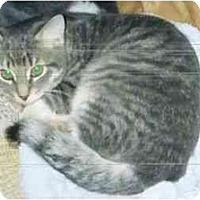 Adopt A Pet :: Missy - Syracuse, NY