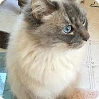 Adopt A Pet :: Marcus - Davis, CA