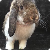 Adopt A Pet :: Alistair - Watauga, TX