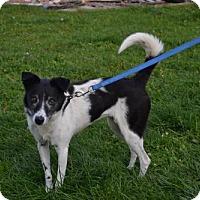 Adopt A Pet :: Terri - Akron, OH