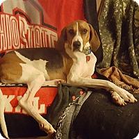 Adopt A Pet :: Petunia - Avon, OH