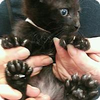 Adopt A Pet :: Argo - Spring, TX