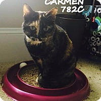 Adopt A Pet :: Carmen - Spring, TX