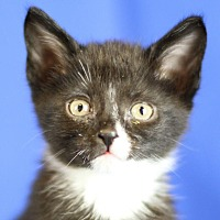 Adopt A Pet :: Tim Curry - Winston-Salem, NC