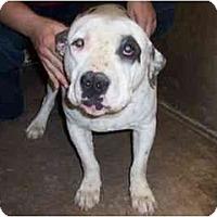 Adopt A Pet :: Humphrey - Scottsdale, AZ