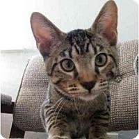 Adopt A Pet :: Bijou - Modesto, CA