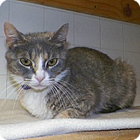 Adopt A Pet :: Mitzy - Dover, OH