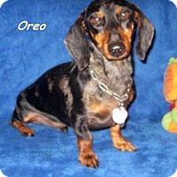 Adopt A Pet :: Oreo - Chandler, AZ